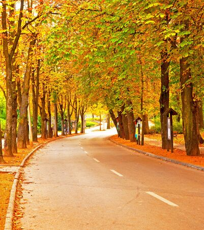 Nice trees in autumn in the city  photo