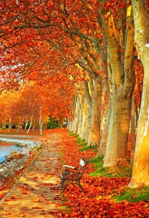 banc de parc: Beaux arbres en automne dans la ville