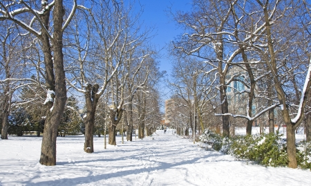 Park in winter with snow  photo