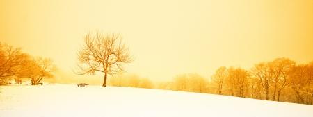 Nice winter scene