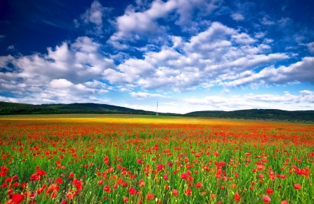 the field and in depth: Poppy field in Hungary  Stock Photo