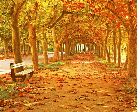 Nice pathway in the city photo