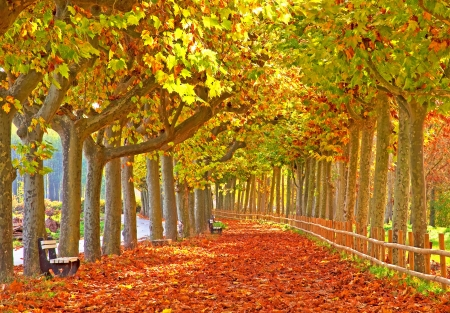 Nice pathway in the city at autumn  photo