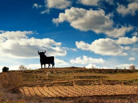 spain: Vineyard in Spain  Stock Photo
