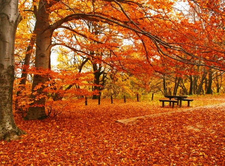 Bench with tree in autumn  photo