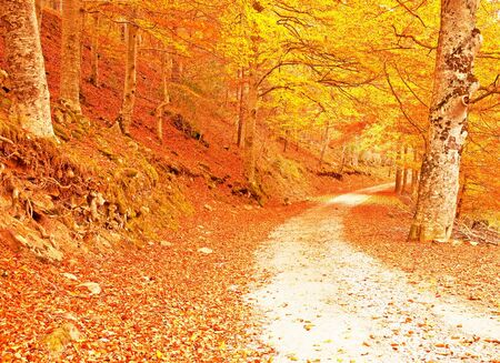 Nice pathway in autumn photo