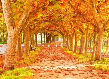 Nice pathway in the city at autumn