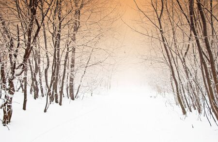 Pathway in the forest in winter  photo
