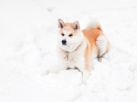 Nice dog in the park in winter with snow  photo