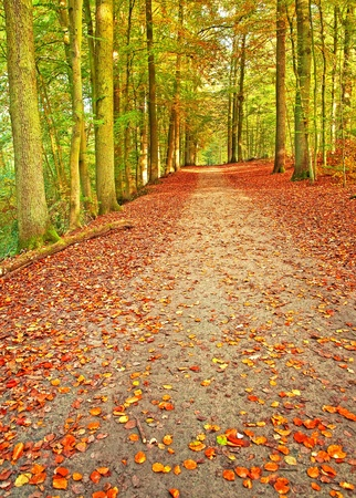 Pathway in the forest at autumn  photo