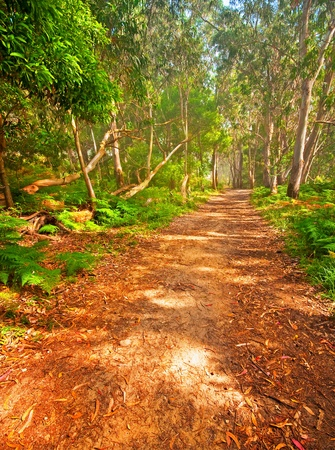 Nice pathway with green leaves in the forest photo