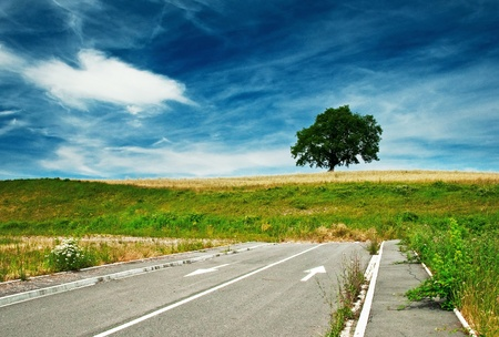 Tree and blue sky with road photo