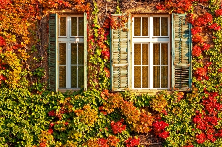Windows at autumn photo