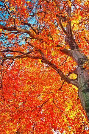 road autumnal: Nice autumnal photo