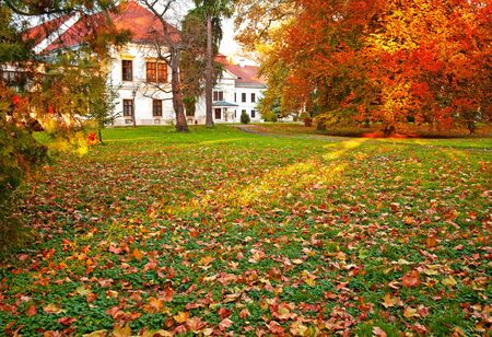 road autumnal: Nice autumnal scene