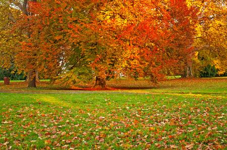 walk path: Nice autumnal scene