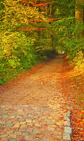 walk path: Nice autumnal scene in the forest Stock Photo
