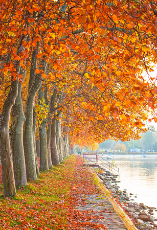 Nice and colorful autumnal scene