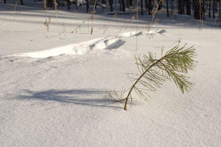 Ślady zwierząt na śniegu. Zdjęcie Seryjne - 2757605