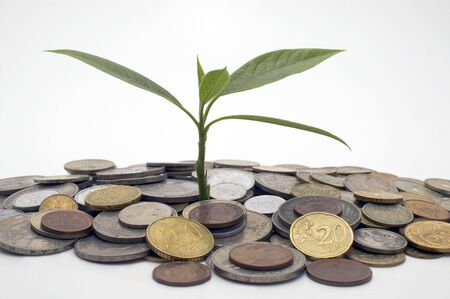 Coins and plant, isolated on white background. Stock Photo