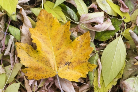 Colorful leaves collection  Standard-Bild