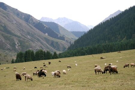 Travel on mountains and rivers of Kyrgyzstan. Stock Photo