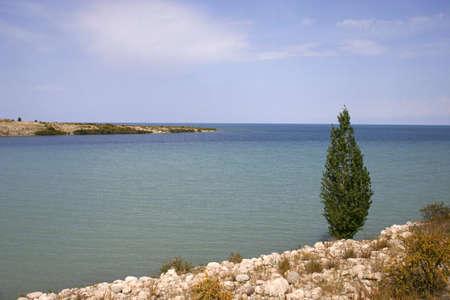 Tree on a stone coast of lake.