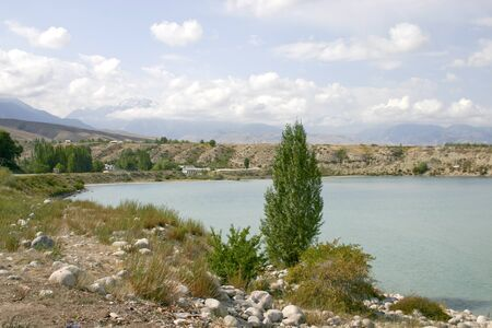 Tree on a coast of lake.