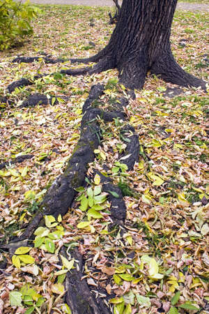 Roots of the large tree.