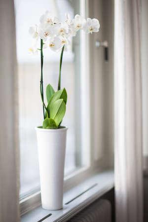 Witte orchidee bloem op het raam Stockfoto
