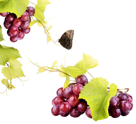 Pink grape isolated on white background photo
