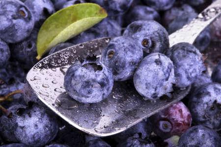 bilberries: Fresh Bilberries  Close-up background