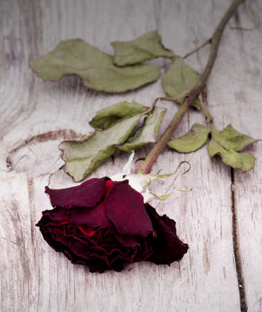 death and dying: Dried faded roses on a wooden background