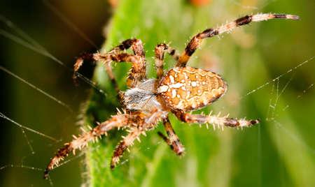 Spider on  web a macro wildlife background photo