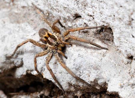 closeup of a Spider macro wildlife background photo