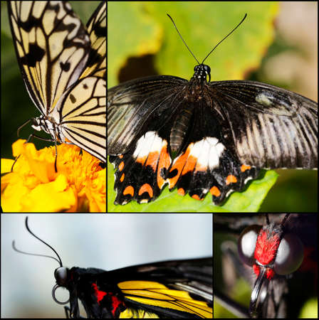 big tropical butterfly sitting on a flower collage photo