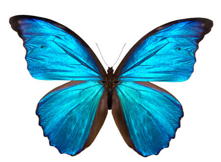 blue violet bright: beautiful butterfly isolated on a white  Stock Photo