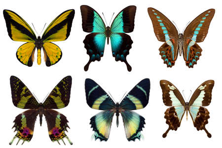 Many different beautiful butterflies on white background photo