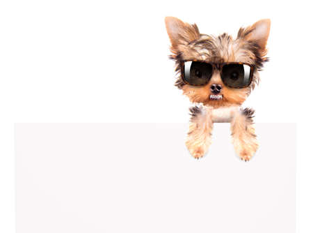 very angry dog with fashion shades above billboard on a white background photo
