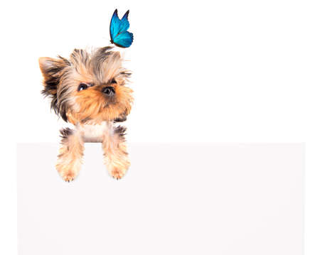 charming Puppy  with blue butterfly above billboard on the white background photo