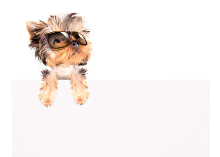 dog with fashion shades above billboard on a white background photo