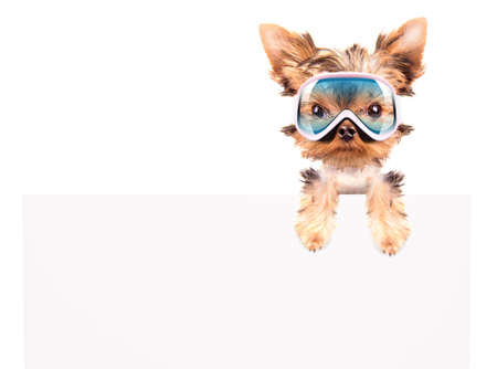 baby dog with ski mask above billboard on a white  photo