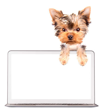 dog using a computer laptop with empty screen photo