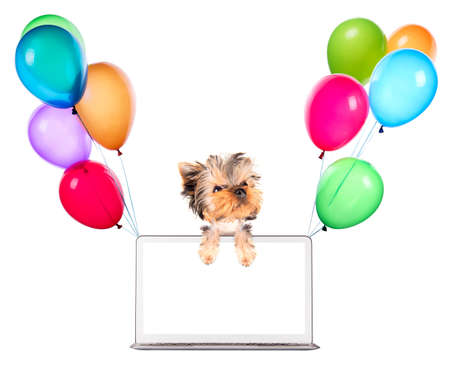 dog using a computer laptop with empty screen and air balloons photo
