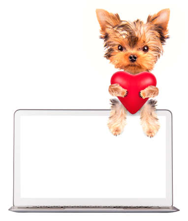 valentine puppy dog holding heart with сomputer photo