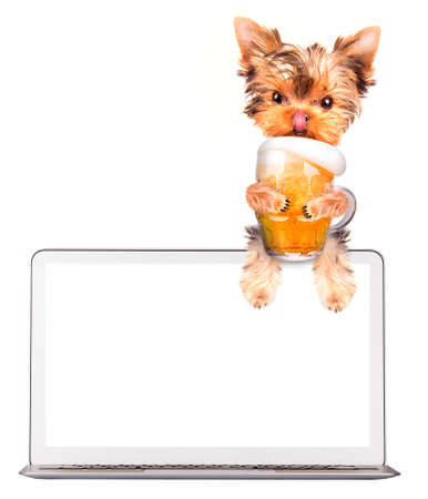 dog on computer with glass of beer photo