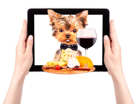 dog holding tray with food on tablet screen photo
