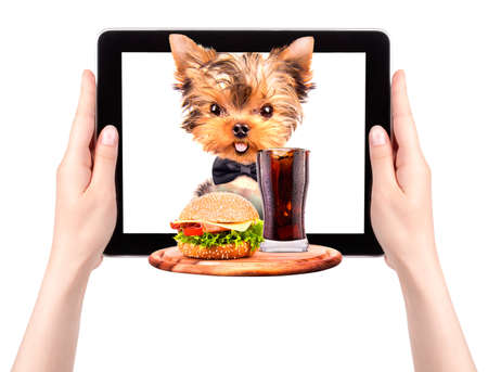 dog holding service tray with food and drink on a tablet screen photo