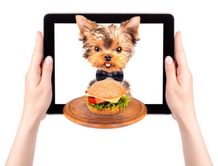 dog holding service tray with food on a digital tablet screen photo