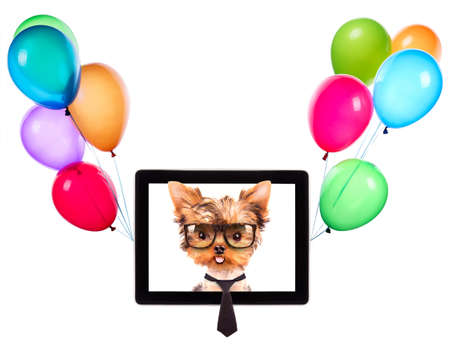 business dog on a digital tablet screen with balloons photo